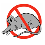 rat IF 3